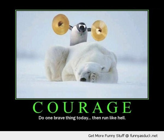 brave penguin cymbles polar bear animal funny pics pictures pic picture image photo images photos lol