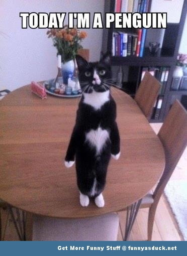 cat penguin lolcat animal funny pics pictures pic picture image photo images photos lol