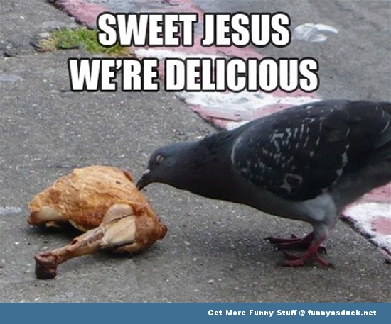 pigeon eating chicken sweet jesus funny pics pictures pic picture image photo images photos lol
