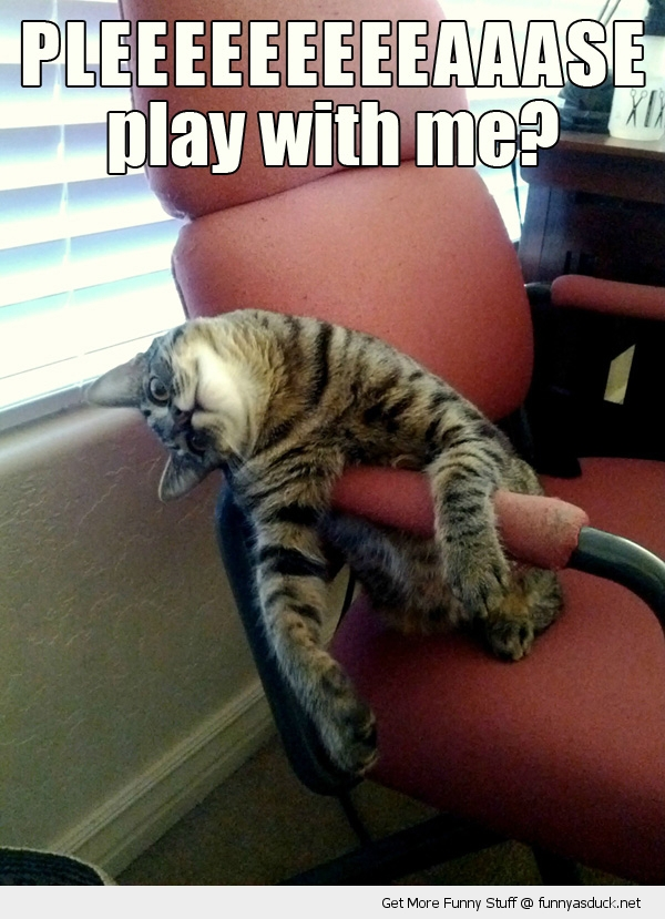 play with me cat lolcat animal funny pics pictures pic picture image photo images photos lol