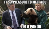 pleasure to meet you panda handshake animal funny pics pictures pic picture image photo images photos lol