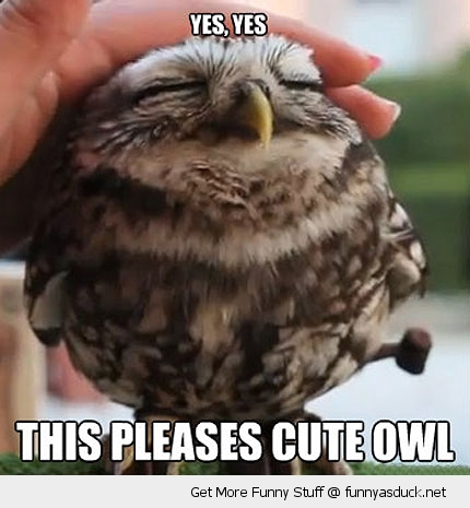 baby owl bird animal cute funny pics pictures pic picture image photo images photos lol