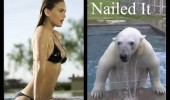 nailed it polar bear animal swimming pool sexy girl funny pics pictures pic picture image photo images photos lol