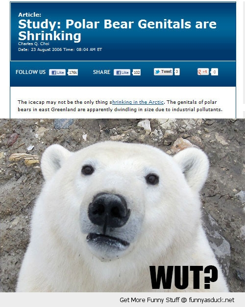 genitals polar bear animal wut news report funny pics pictures pic picture image photo images photos lol