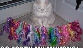 go forth little pony toys cat lolcat animal funny pics pictures pic picture image photo images photos lol