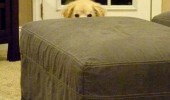 poop already there dog hiding animal funny pics pictures pic picture image photo images photos lol