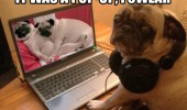 pop up pug dog laptop computer porn funny pics pictures pic picture image photo images photos lol
