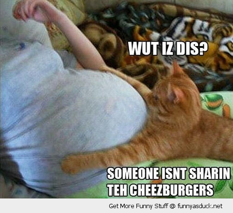 what is this cat lolcat pregnant lady cheezeburger funny pics pictures pic picture image photo images photos lol