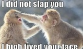monkey slap you high 5 face animal funny pics pictures pic picture image photo images photos lol