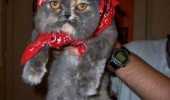 put me down cat lolcat wheat motherland animal funny pics pictures pic picture image photo images photos lol