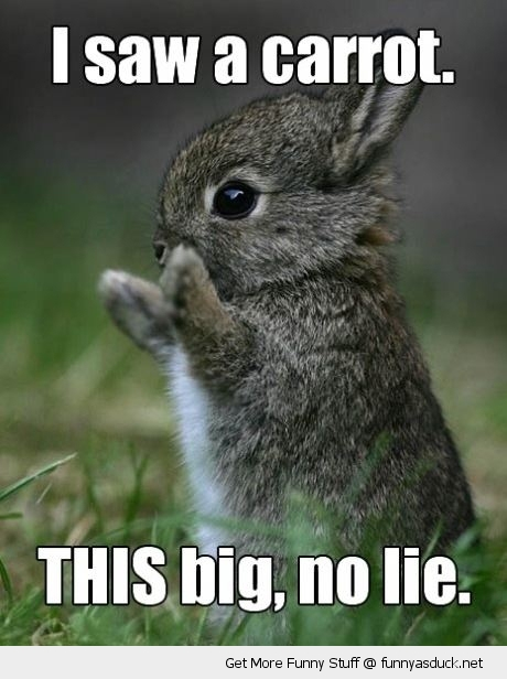 rabbit carrot this big animal funny pics pictures pic picture image photo images photos lol