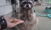 for me shocked surprised raccoon animal funny pics pictures pic picture image photo images photos lol