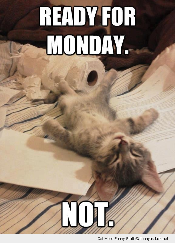 ready for monday sleeping cat lolcat animal funny pics pictures pic picture image photo images photos lol