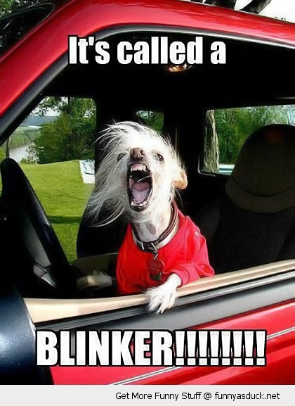 angry road rage dog blinker car animal funny pics pictures pic picture image photo images photos lol