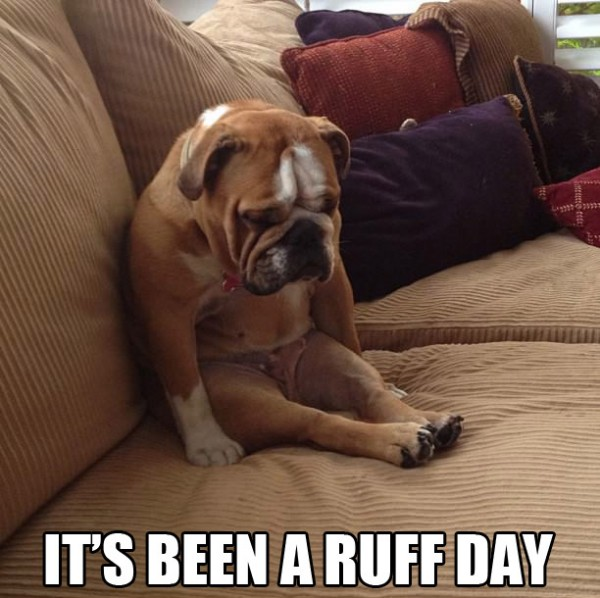 dog animal sad cute ruff day funny pics pictures pic picture image photo images photos lol
