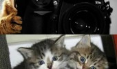 say fleas cheese cats lolcats kittens camera funny pics pictures pic picture image photo images photos lol
