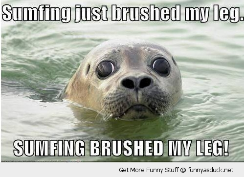 something brushed my leg seal animal water scared funny pics pictures pic picture image photo images photos lol
