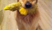 scumbag dog animal love toy fights funny pics pictures pic picture image photo images photos lol