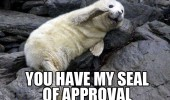 seal of approval animal ocean funny pics pictures pic picture image photo images photos lol