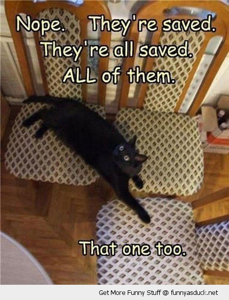 all seats saved cat lolcat animal chairs funny pics pictures pic picture image photo images photos lol