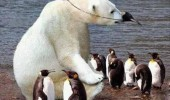 seems legit polar bear penguin aniaml funny pics pictures pic picture image photo images photos lol