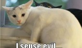 soon black cat sense evil lolcat animal funny pics pictures pic picture image photo images photos lol