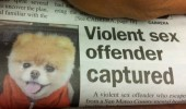 sex offender dog newspaper fail animal funny pics pictures pic picture image photo images photos lol