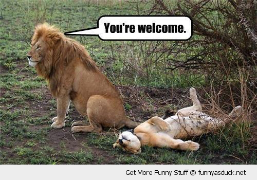 [Image: funny-sex-youre-welcom-lion-pics.jpg]