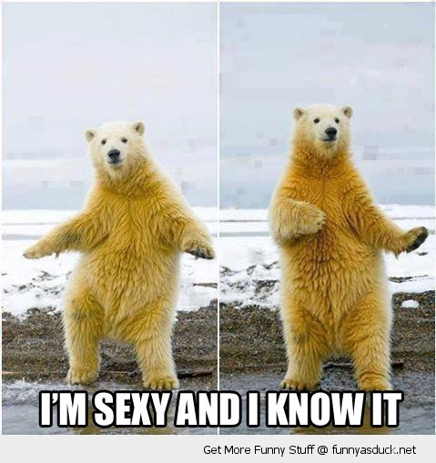 sexy know it polar bear dancing animal funny pics pictures pic picture image photo images photos lol