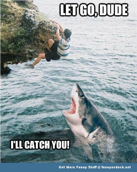 shark man cliff let go fish animal funny pics pictures pic picture image photo images photos lol