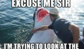 excuse me shark okay fish animal funny pics pictures pic picture image photo images photos lol