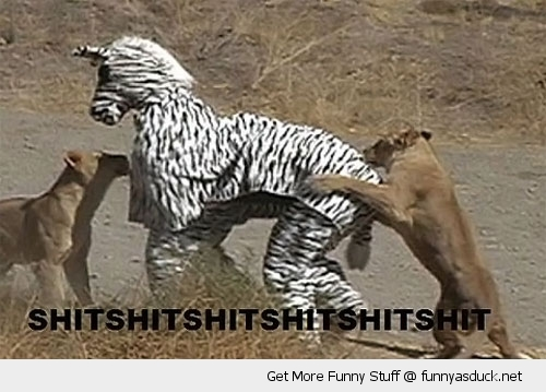 shit zebra costume jungle lion animal funny pics pictures pic picture image photo images photos lol