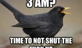 3am shut up bird animal signing funny pics pictures pic picture image photo images photos lol
