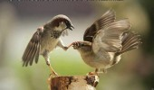 shut your beak bird animal meme funny pics pictures pic picture image photo images photos lol