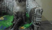 talk human sit aniaml cat lolcat funny pics pictures pic picture image photo images photos lol