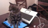 sit keyboard laptop cat lolcat animal funny pics pictures pic picture image photo images photos lol