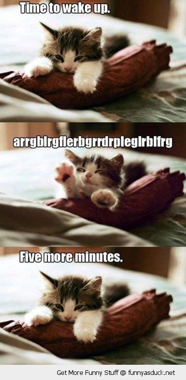 tired sleepy cat kitten lolcat cute animal funny pics pictures pic picture image photo images photos lol