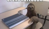 sloth notebook class desk animal funny pics pictures pic picture image photo images photos lol