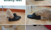 cat lolcat smelly shoes feet animal funny pics pictures pic picture image photo images photos lol