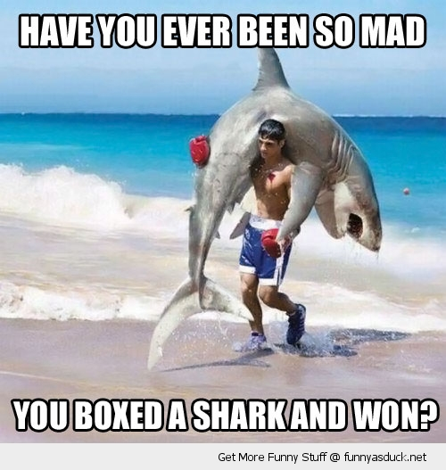 boxed a shark won boxer beach angry funny pics pictures pic picture image photo images photos lol