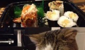 soon now cat animal lolcat sushi funny pics pictures pic picture image photo images photos lol