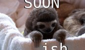 soon ish baby sloth cute animal funny pics pictures pic picture image photo images photos lol