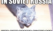 soviet russia cat spider web animal funny pics pictures pic picture image photo images photos lol
