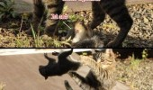 cat squirrel gtfo animals hey funny pics pictures pic picture image photo images photos lol