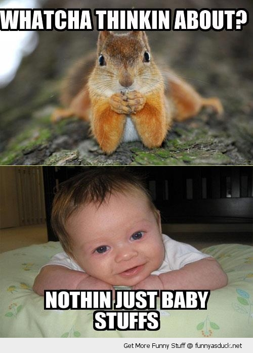 thinking about squirrel dunno baby stuff animal cute funny pics pictures pic picture image photo images photos lol