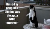 cat standing lolcat animal penguin funny pics pictures pic picture image photo images photos lol
