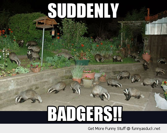 suddenly badgers back yard garden animals funny pics pictures pic picture image photo images photos lol