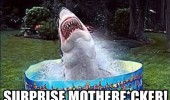 surprise shark fish swimming paddling pool funny pics pictures pic picture image photo images photos lol