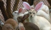 suspect nothing cat rabbit bunny ears animal funny pics pictures pic picture image photo images photos lol