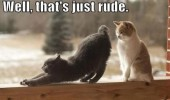 just rude cats asshole face animal funny pics pictures pic picture image photo images photos lol